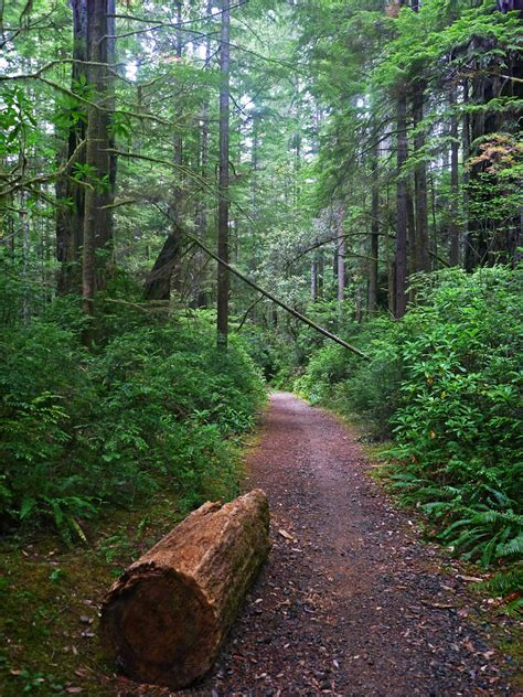 Little Bald Hills Trail, Jedediah Smith Redwoods State