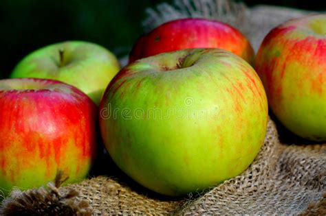 Background Rural Farm With Apples On Coarse Cloth Sacking