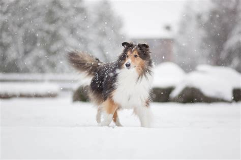 Chico's not sure if he can enjoy the snow when he
